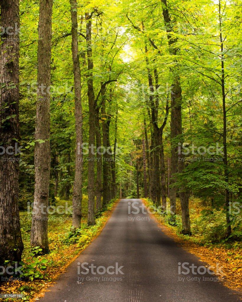 Eine Straße durch Herbst Wald – Foto