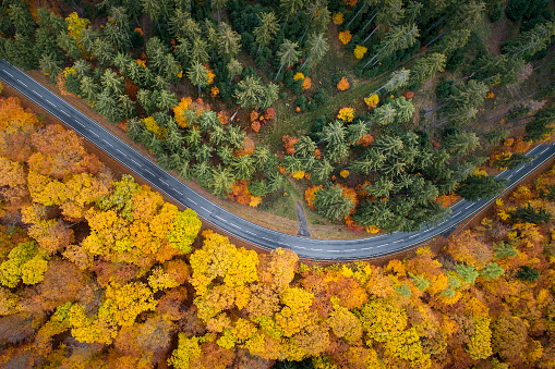 Road through colourful autumnal forest - aerial view