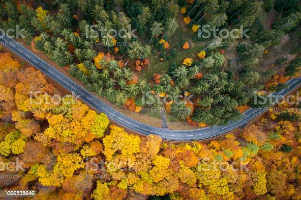Photo of Road through autumnal forest - aerial view