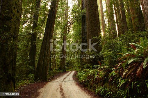 winding road through dense forest.