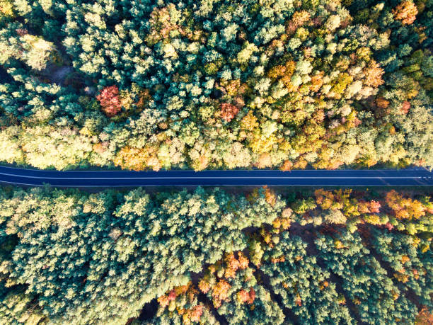 Road through colorful autumn forest stock photo