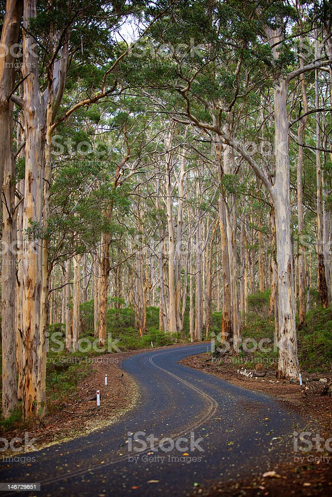 Road through Forest of the Giants royalty-free stock photo