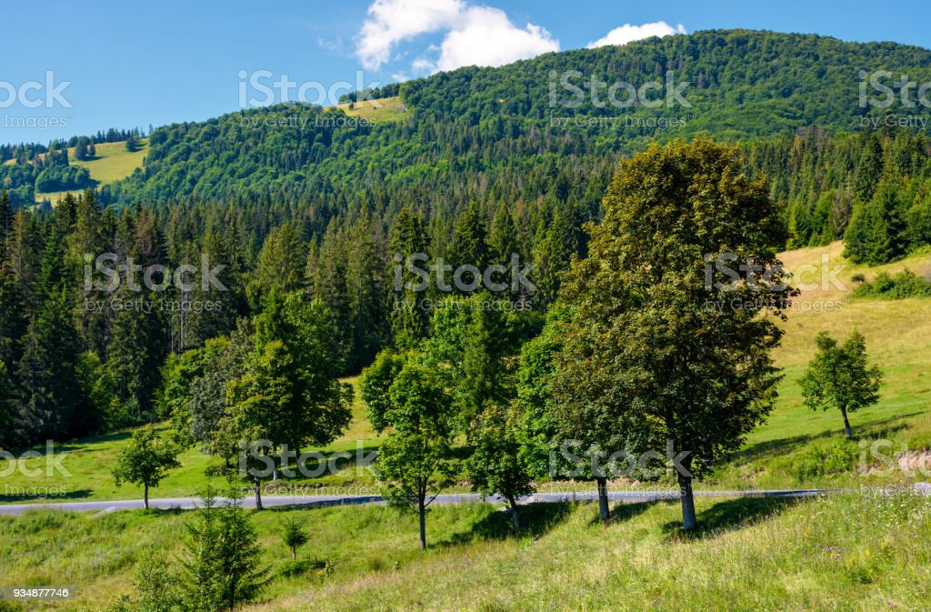 road through forest on hillside stock photo
