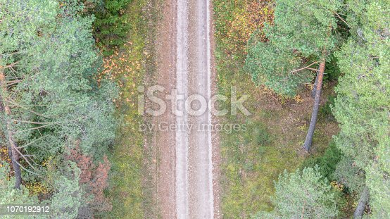 Forest, Tree, Pine Tree, Aerial View, aerophoto, aerial photography,
