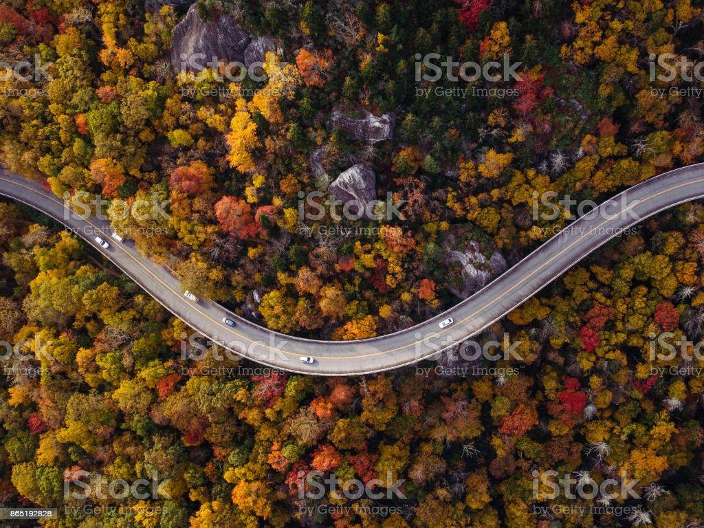 Straße durch Wald mit Autos – Foto