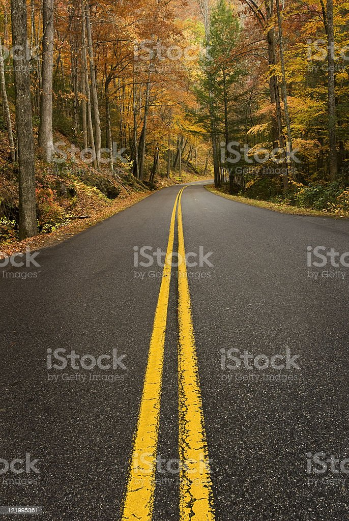 Road Through Rainy Forest royalty-free stock photo