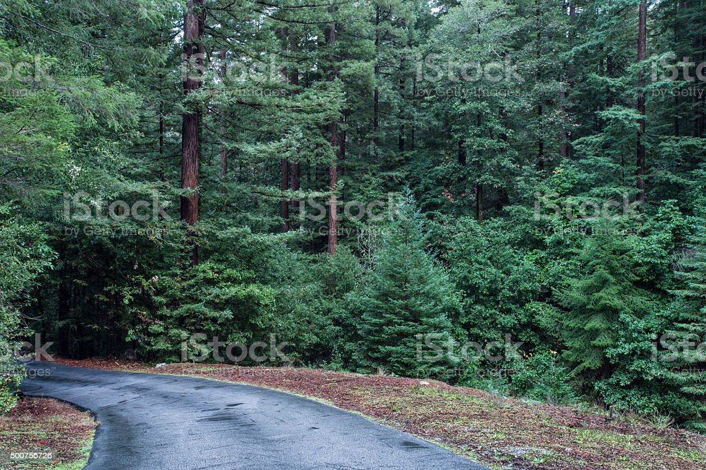 Road Through Redwood Forest stock photo