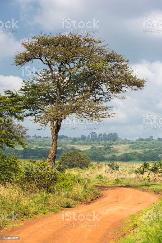 Road Through Savanna stock photo