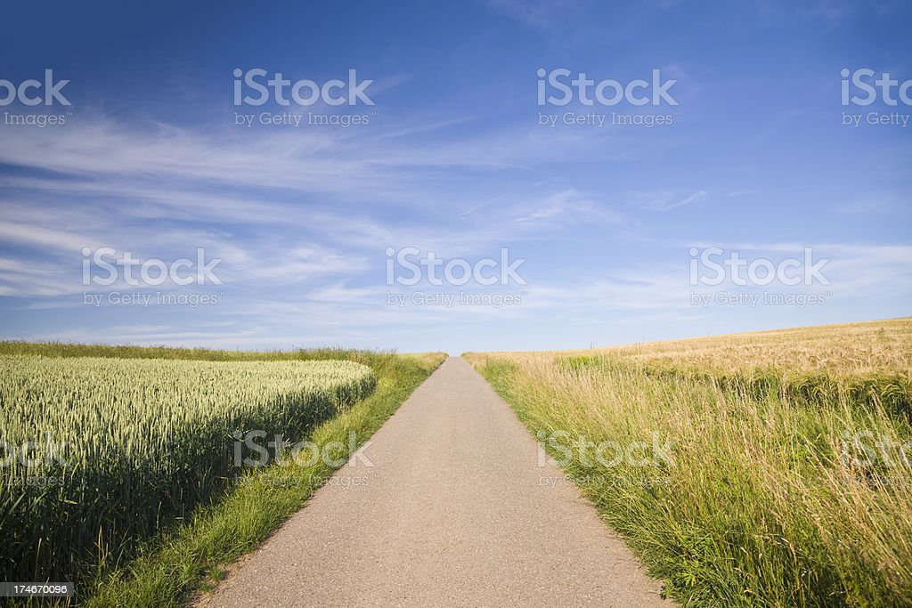 Road through Summer Fields royalty-free stock photo