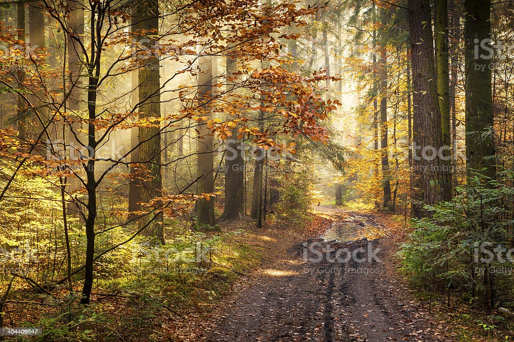 Road through the Autumn Forest - Morning Fog royalty-free stock photo