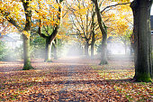 Road through the autumn forest with high trees, misty and fog road with the colors orange and yellow landscape colorful