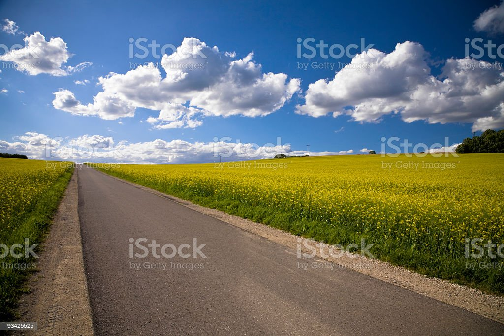 A road through the countryside, lined with crops stock photo