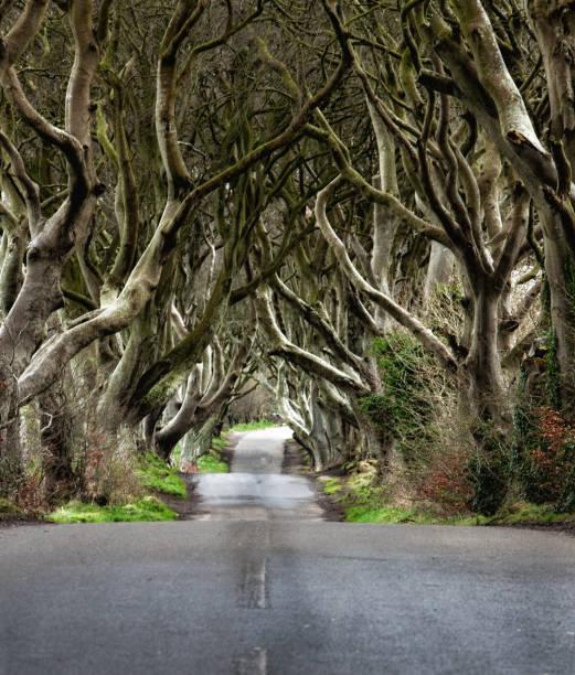 Estrada através das Hedges escuras uma estrada original n do túnel da árvore de faia Ballymoney, Irlanda do Norte. Jogo da posição dos tronos - foto de acervo