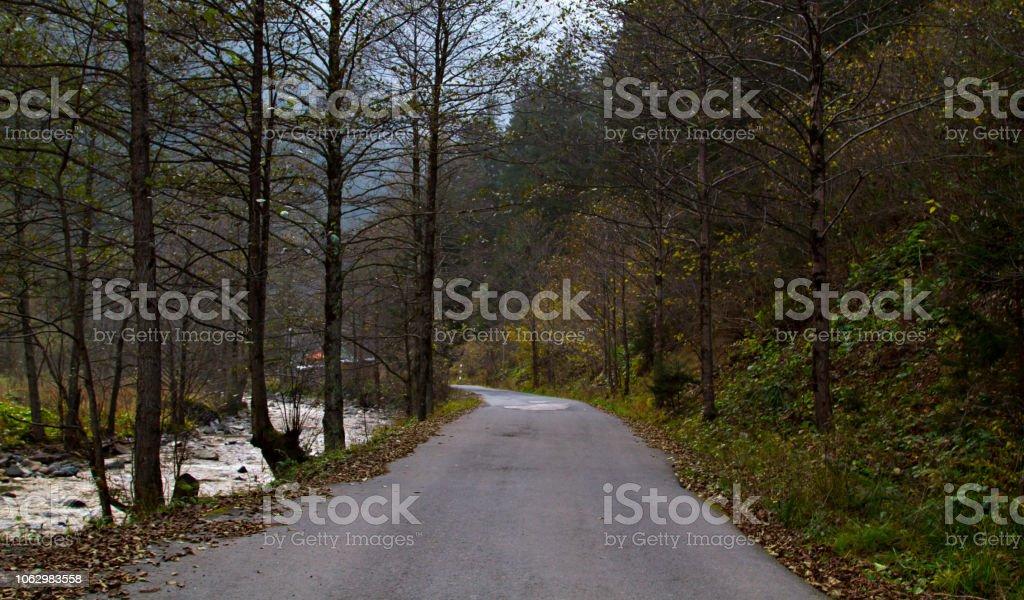 Orman yoluyla yol stok fotoğrafı