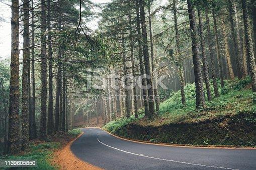 Road through the pine forest on Madeira island (Porutgal).