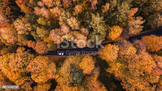istock Road through the forest 867436292