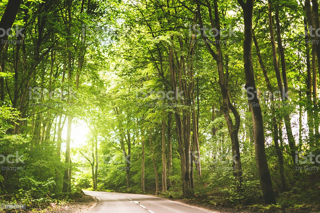 road through the forest with sunbeam royalty-free stock photo