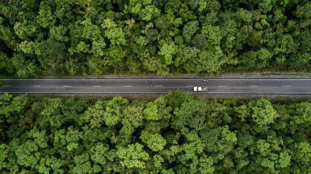 Road through the green forest, aerial view road going through forest. stock photo