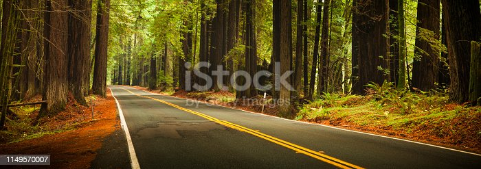 Avenue of the Giants Humboldt Redwoods State Park California, USA