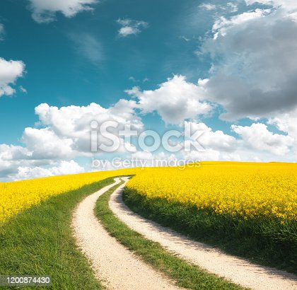 Idyllic country road in the middle of yellow fields.