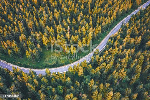 Winding mountain road through the pine forest.