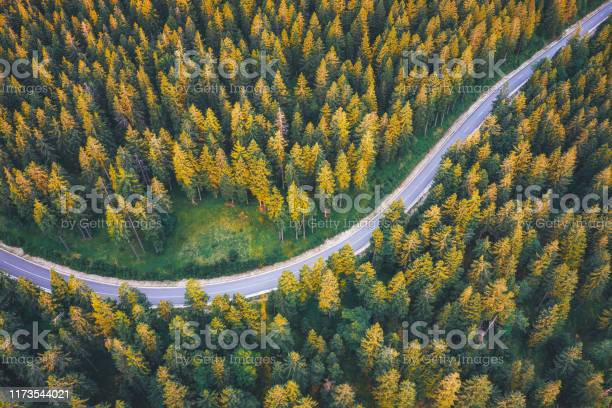 Photo of Road Through The Pine Forest