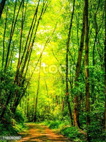 Single-lane Dirt Road through the Woods - Appalachian Mountains -  Ver Soft Focus - dreamy
