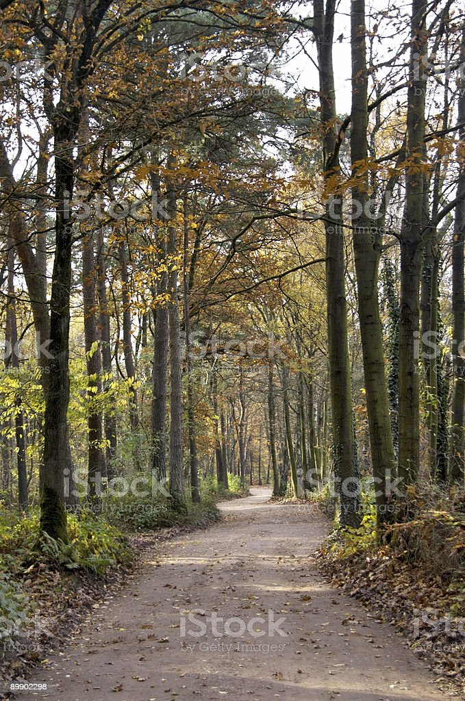 Road through the woods royalty-free stock photo