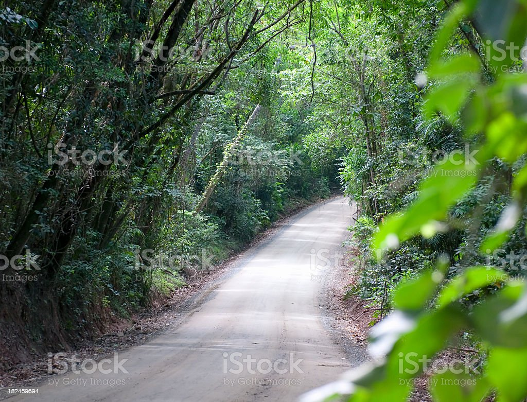 Road Through Thick Rainforest royalty-free stock photo