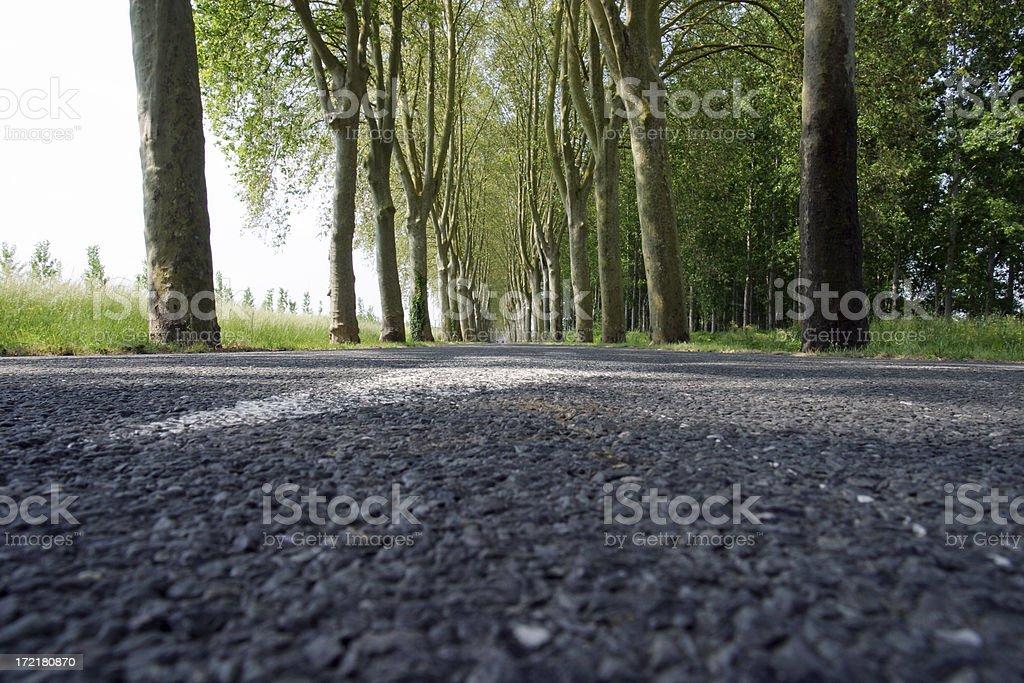 Road through trees royalty-free stock photo