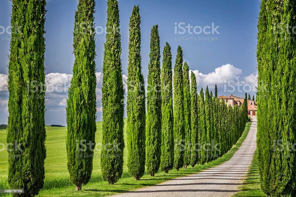 Road to agritourism in Tuscany with cypresses stock photo