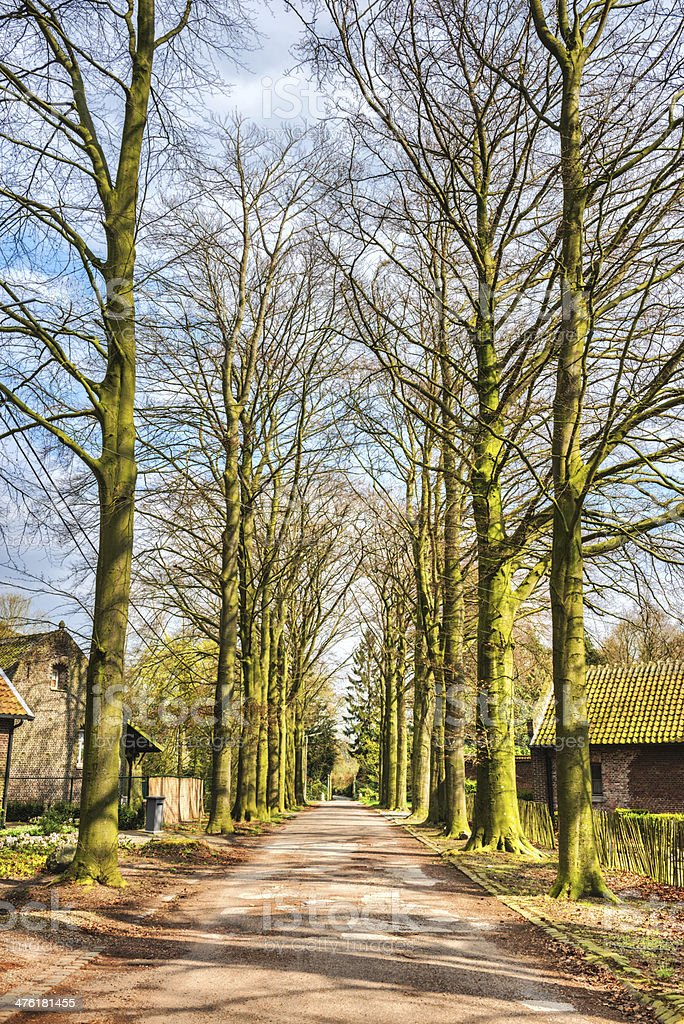 Road to Old Village Cottage Houses Covered with Green Colors royalty-free stock photo