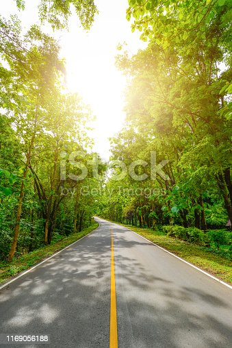 istock Road to the forest with many trees beside the way in perspective 1169056188