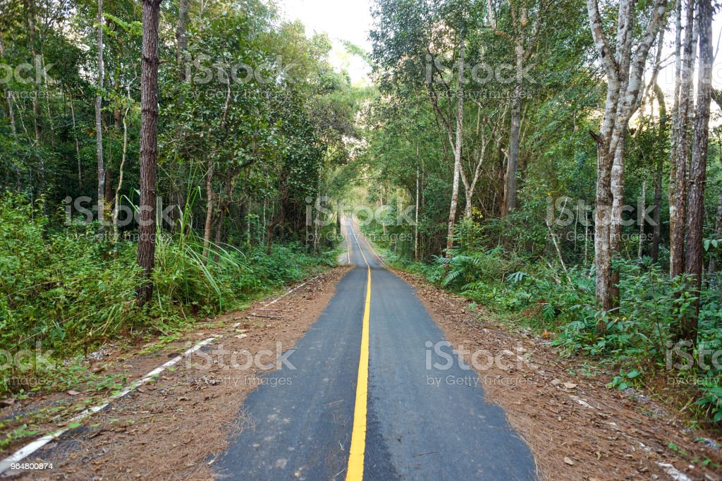 road to the forrest royalty-free stock photo
