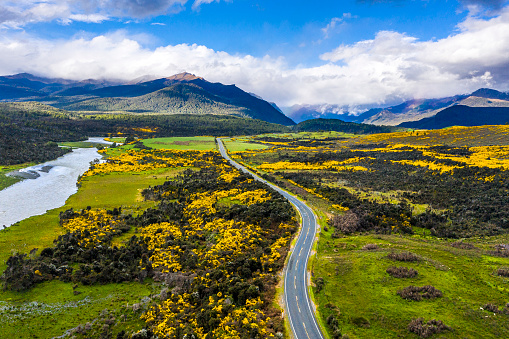 Road to the mountains through flowering meadows and green pastures in picturesque New Zealand