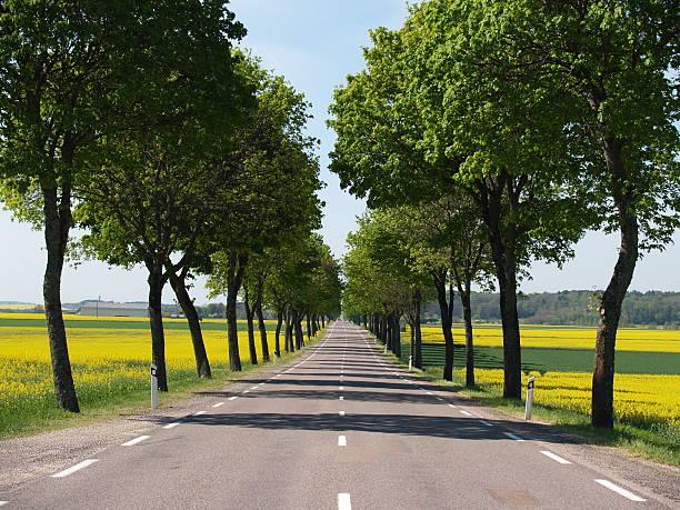 Avenida de árboles - foto de stock