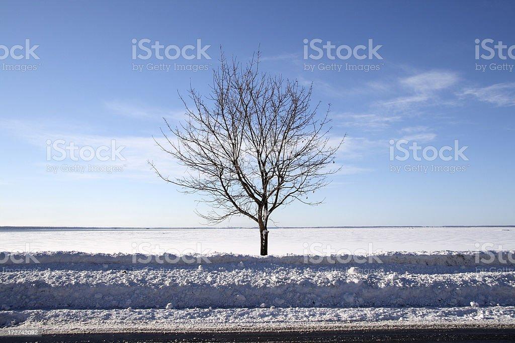 road, tree, lake royalty-free stock photo