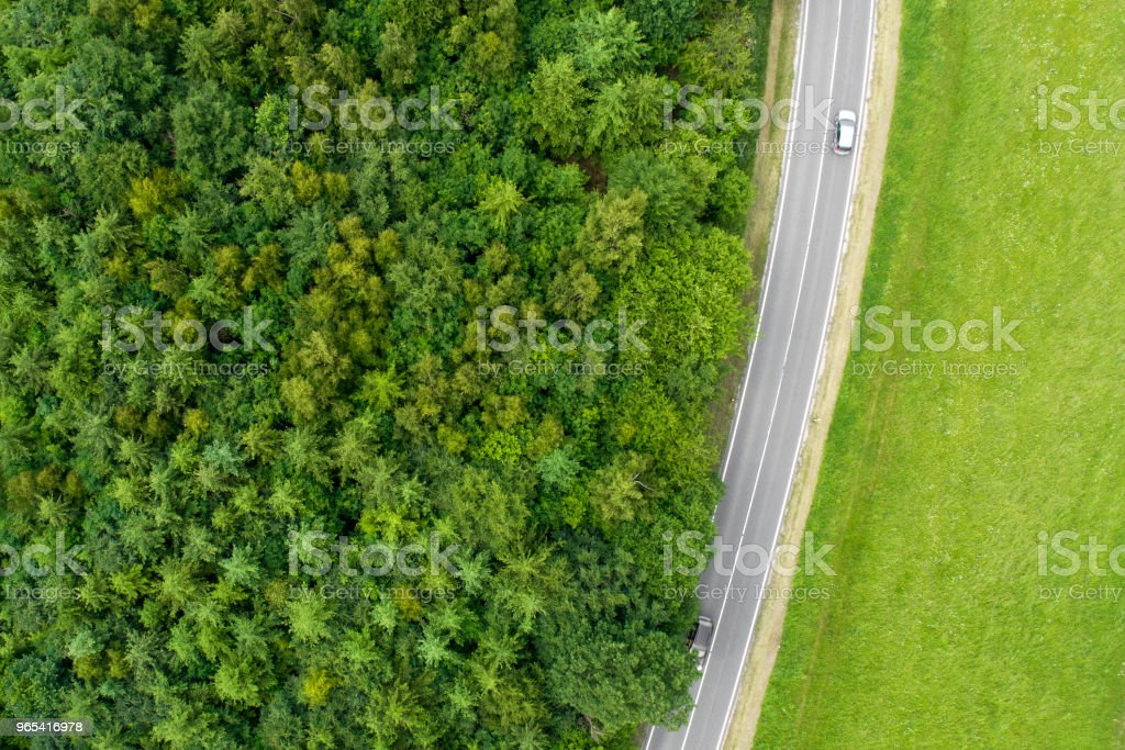 Road, trees and fields royalty-free stock photo