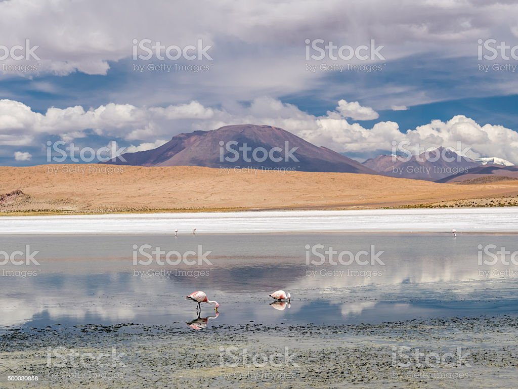Road trip in the Andes royalty-free stock photo