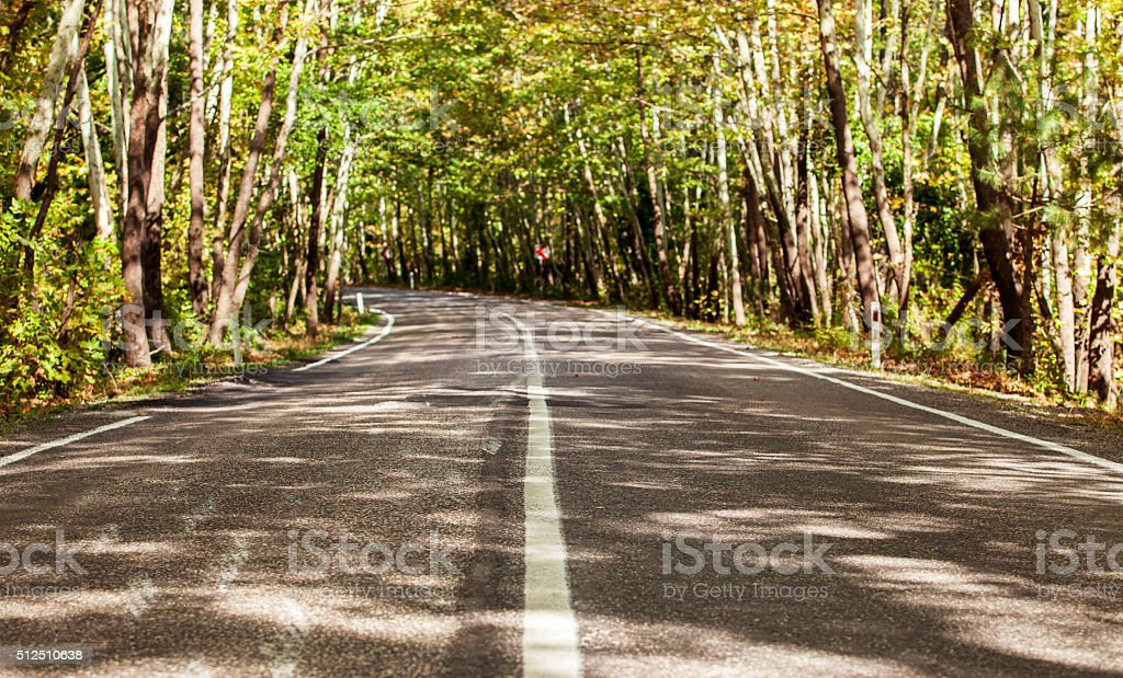 Road Trip in the Spring Forest stock photo