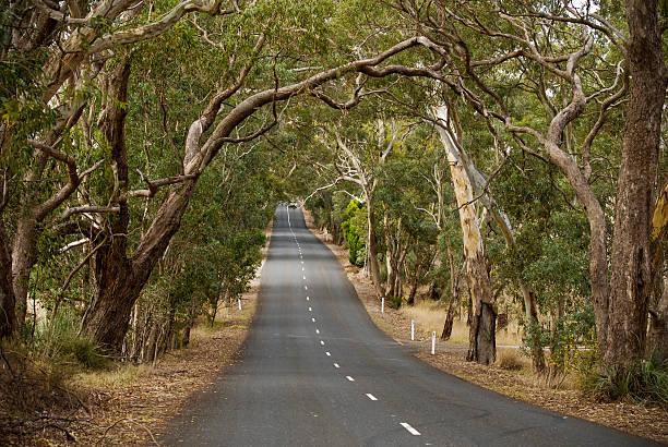 Road trip through the Gum Trees stock photo