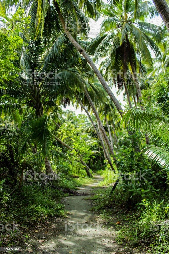 Road trough jungle stock photo