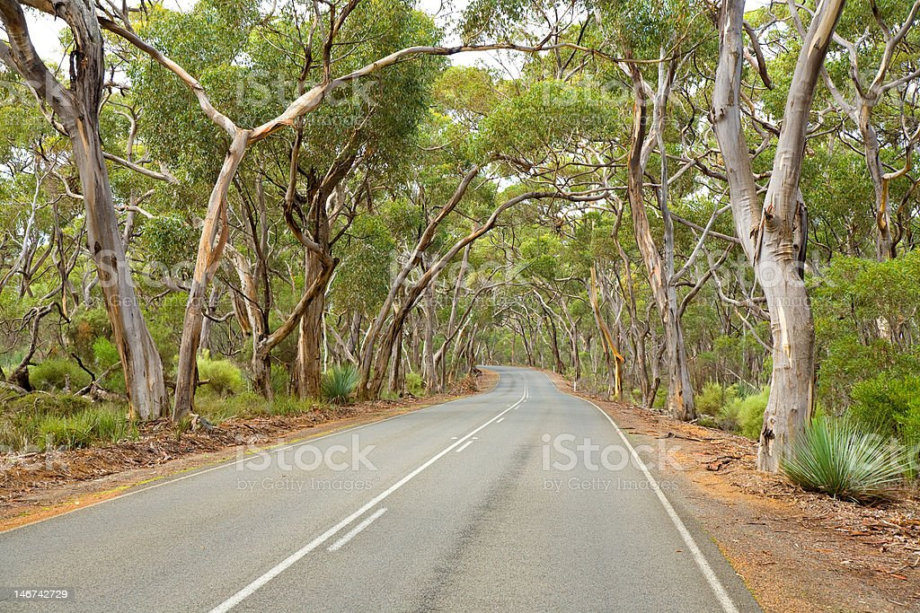Road under gum trees Kangaroo Island South Australia stock photo