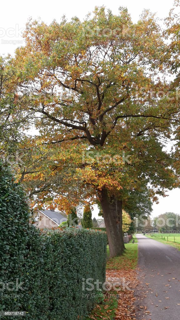 Road wilh beautiful colored trees in autumn in Netherlands stock photo