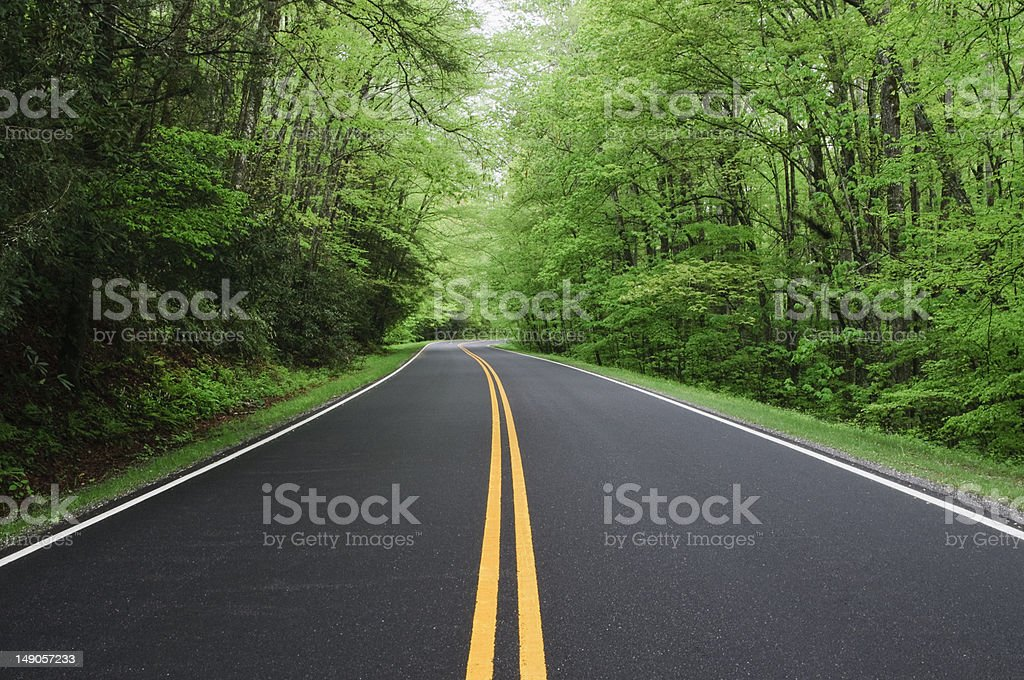 road with forest on either side stock photo