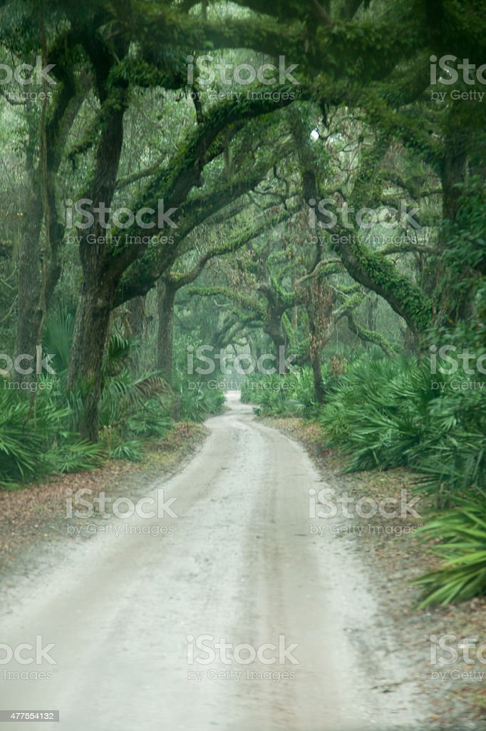Road with Moss covered trees stock photo