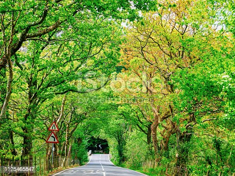Road with natural green tree arch at Snowdonia National Park in North Wales in United Kingdom.