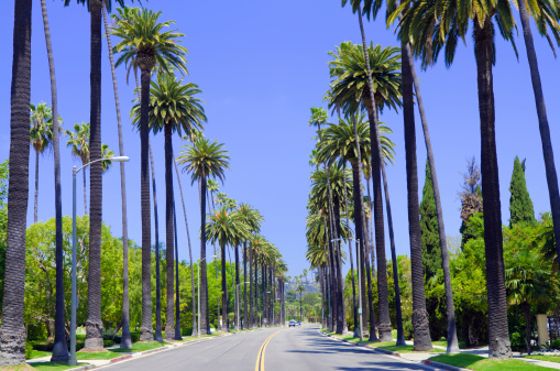 Road with palm trees in Los Angeles County