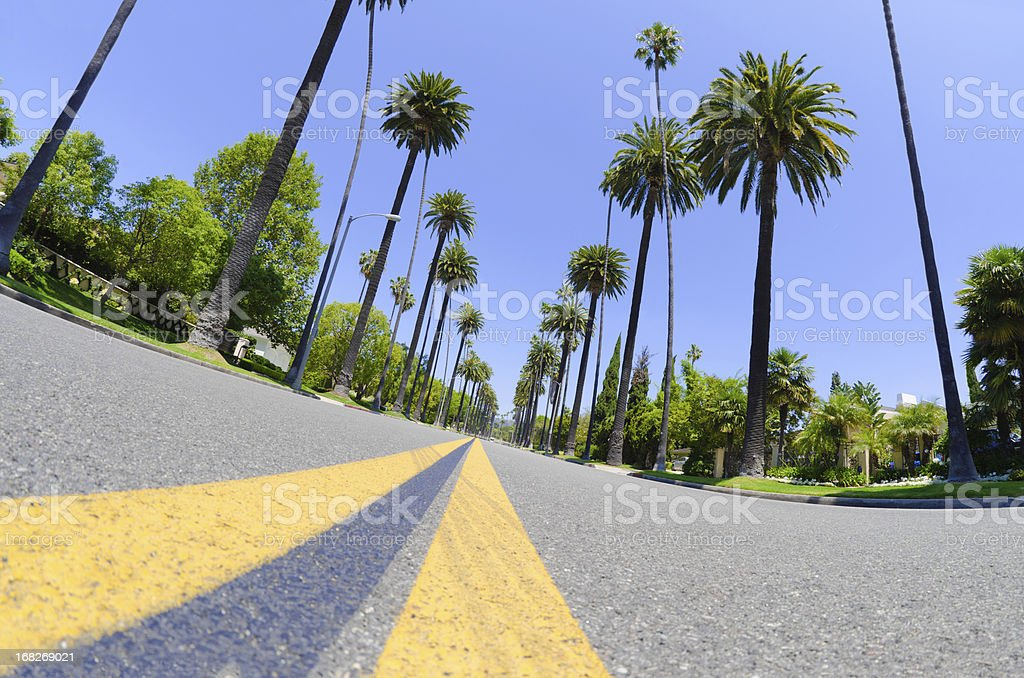Road with palm trees in Los Angeles County stock photo