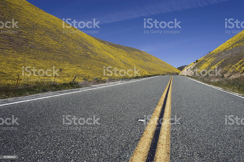 Road with wildflowers royalty-free stock photo